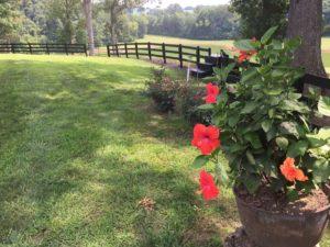 Fence Painting Murfreesboro
